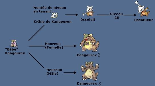 Th orie une relation entre osselait kangourex et missingno - Pokemon mega kangourex ...